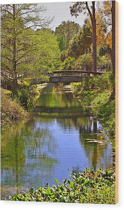Silver Springs Florida Wood Print by Christine Till