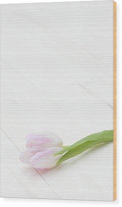 Simply Tulip Wood Print by Anne Gilbert
