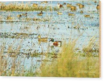 Sitting Ducks Wood Print by Scott Pellegrin