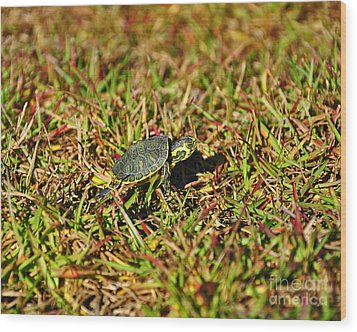 Slider To Go Wood Print by Al Powell Photography USA