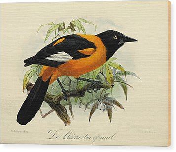 Small Oriole Wood Print by J G Keulemans