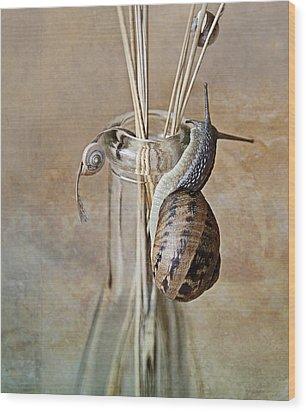 Snails Wood Print by Nailia Schwarz