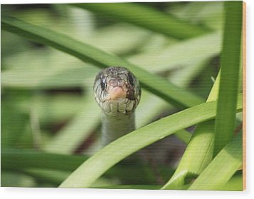Snake In The Grass Wood Print by Jennifer E Doll