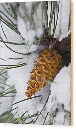 Snowy Pine Cone Wood Print by Elena Elisseeva