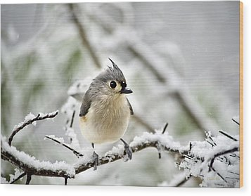 Snowy Tufted Titmouse Wood Print by Christina Rollo