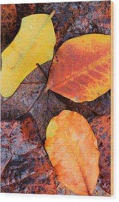 So Cal Autumn Wood Print by Heidi Smith