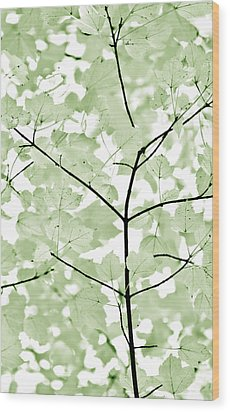 Soft Forest Green Leaves Melody Wood Print by Jennie Marie Schell
