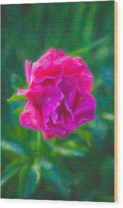 Soft Pink Peony Wood Print by Omaste Witkowski