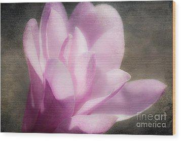 Soft Violet Flower - Greensboro North Carolina Wood Print by Dan Carmichael