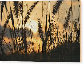 Solstice Wood Print by Laura Fasulo
