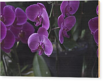 Some Very Beautiful Purple Colored Orchid Flowers Inside The Jurong Bird Park Wood Print by Ashish Agarwal