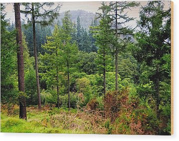 Somewhere In The Forest Over Upper Lake. Glendalough. Ireland Wood Print by Jenny Rainbow