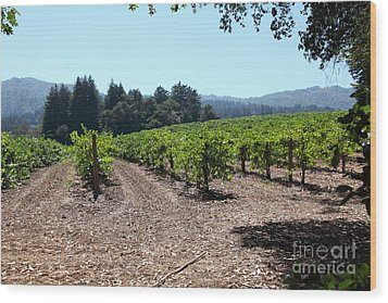 Sonoma Vineyards In The Sonoma California Wine Country 5d24511 Wood Print by Wingsdomain Art and Photography