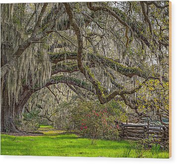 Southern Charm Wood Print by Steve DuPree