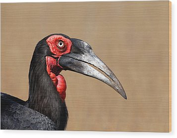 Southern Ground Hornbill Portrait Side View Wood Print by Johan Swanepoel