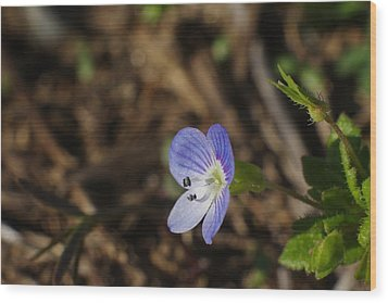 Speedwell Wood Print by Billy  Griffis Jr