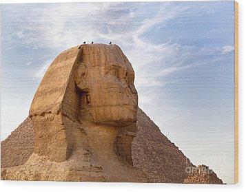 Sphinx Egypt Wood Print by Jane Rix