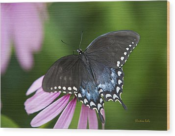 Spice Of Life Butterfly Wood Print by Christina Rollo