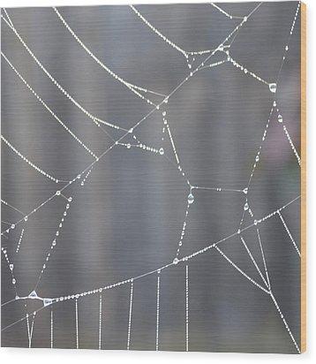Spider Web In Rain Wood Print by Cheryl Miller