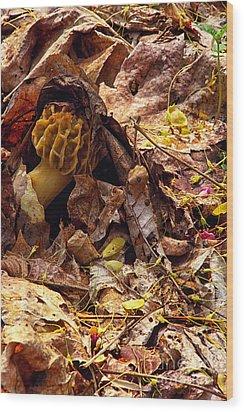 Spring Bounty Morel Mushroom Wood Print by Thomas R Fletcher