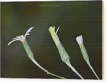 Spring Phase Wood Print by Sonali Gangane