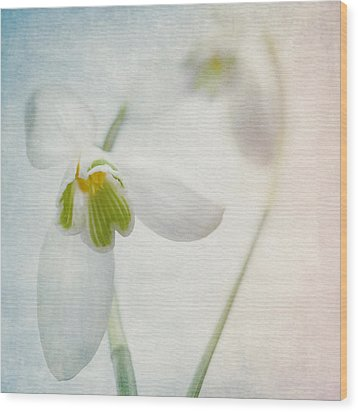 Springflower Wood Print by Annie Snel