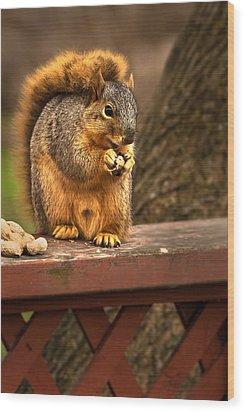Squirrel Eating A Peanut Wood Print by  Onyonet  Photo Studios