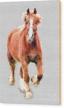 Stallion Portrait Wood Print by Dan Friend