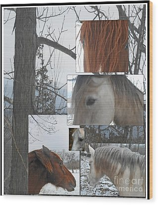 Stallions Collage There Is A Connection Wood Print by Patricia Keller