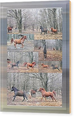 Stallions Enjoy Some Horsing Around Wood Print by Patricia Keller