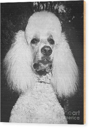 Standard Poodle Wood Print by ME Browning
