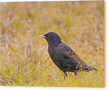Starling On Lime Grass Wood Print by Bill Tiepelman
