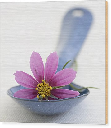 Still Life With Pink Flower On A Blue Spoon Wood Print by Frank Tschakert