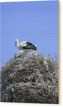 Storks Nesting Wood Print by Photostock-israel