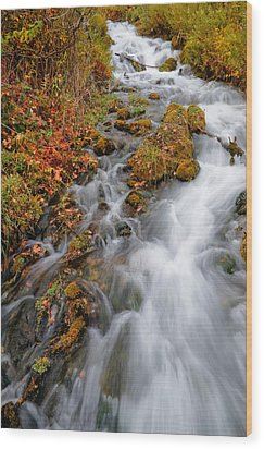 Stream In Autumn Wood Print by Utah Images