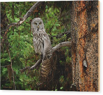 Stretch Wood Print by Christopher Balmer