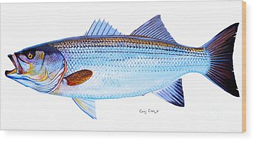 Striped Bass Wood Print by Carey Chen
