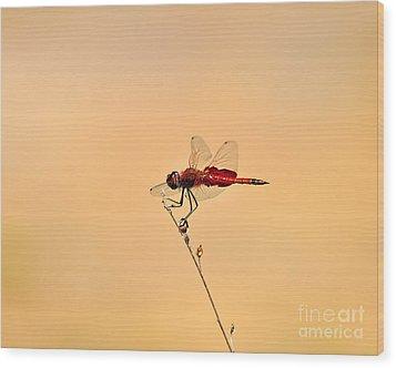 Stunning Saddlebags Wood Print by Al Powell Photography USA