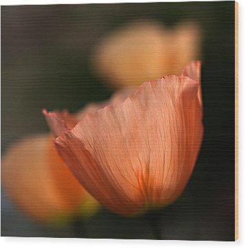 Suenos De Flores Wood Print by Joe Schofield