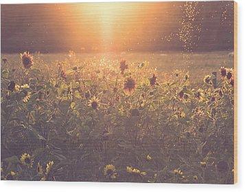 Summer Evening Wood Print by Chris Fletcher