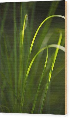 Sun-kissed Grass Wood Print by Christina Rollo