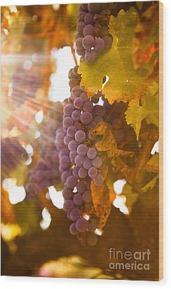 Sun Ripened Grapes Wood Print by Diane Diederich