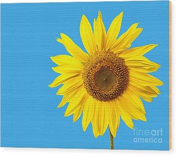 Sunflower Blue Sky Wood Print by Edward Fielding