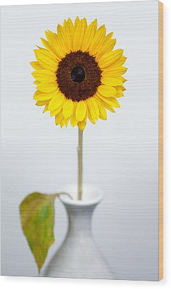Sunflower Wood Print by Dave Bowman