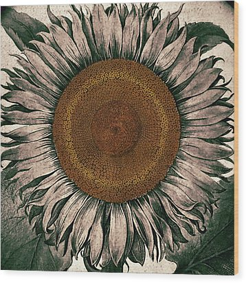 Sunflower - Face To The Sunshine Wood Print by Patricia Januszkiewicz