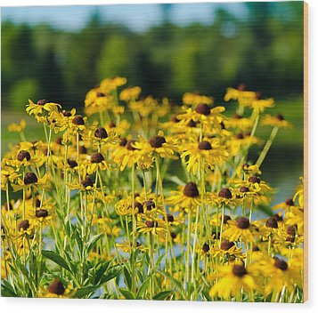 Sunflower Patch Wood Print by John Ullrick