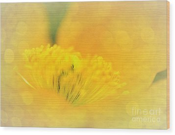 Sunlight On Poppy Abstract Wood Print by Kaye Menner