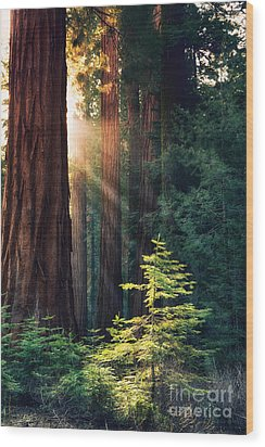 Sunlit From Heaven Wood Print by Jane Rix