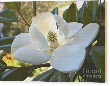 Sunlit Southern Magnolia Wood Print by Carol Groenen