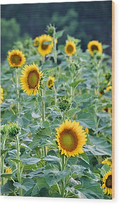 Sunny Faces Wood Print by Jan Amiss Photography
